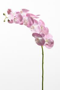 Phalaenopsis - Rosa - 75 cm - www.frokenfraken.se