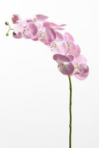 Mr Plant Phalaenopsis - Rosa - 75 cm