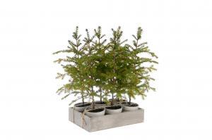 Mr Plant Gran - Grön - 45 cm
