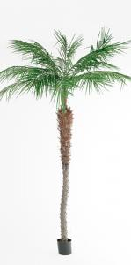 Phoenix Palm - - 240 cm - www.frokenfraken.se