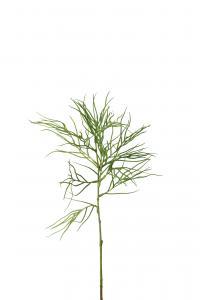 Grevillea - 75 cm - www.frokenfraken.se