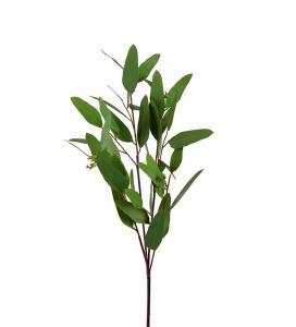Eucalyptus - Grön - 80 cm - www.frokenfraken.se