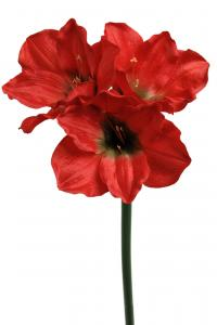Amaryllis - Röd - 65 cm - www.frokenfraken.se