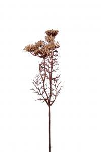 Trachelium - Brun - 40 cm - www.frokenfraken.se