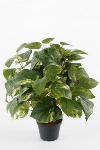 Mr Plant Gullranka - Grön - 40 cm