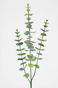 Eucalyptus - Grön - 60 cm - www.frokenfraken.se