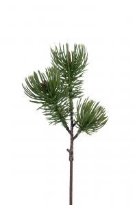 Tall - Grön - 28 cm - www.frokenfraken.se