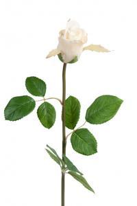 Mr Plant Ros - Vit sidenros - 50 cm
