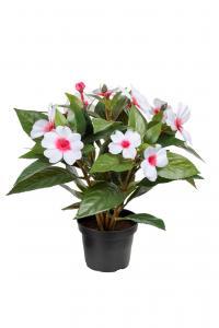 Mr Plant Lyckliga Lotta - Rosa - 30 cm - www.frokenfraken.se