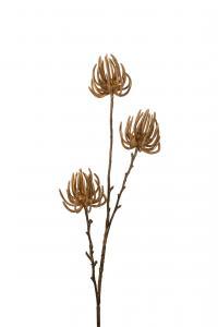 Succulent - Brun - 75 cm - www.frokenfraken.se