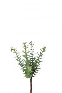 Succulent - Grön - 18 cm - www.frokenfraken.se