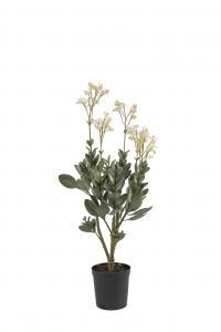 Mr Plant Kalanchoe - Rosa - 90 cm