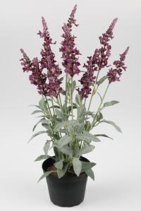 Mr Plant Veronica - Lila - 46 cm