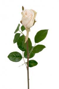 Mr Plant Ros - Cremefärgad sidenros - 50 cm