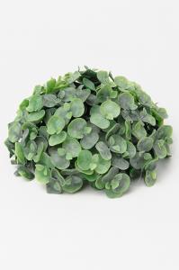 Mr Plant Eucalyptus - Grön - 9 cm