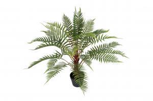 Mr Plant Ormbunke - Grön - 80 cm