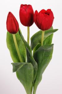 Tulpan mix - Röd - 36 cm - www.frokenfraken.se