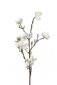 Mr Plant Magnolia med snö - Vit - 85 cm