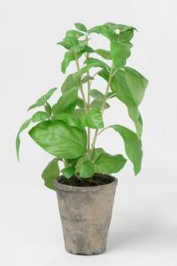 Mr Plant Basilika - Grön - 38 cm - www.frokenfraken.se