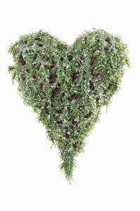 Mr Plant Hjärta - Cypress med is - 20 cm