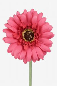 Mr Plant Gerbera - Rosa - 55 cm
