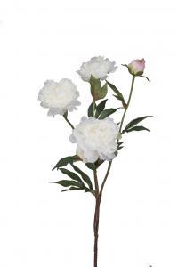 Mr Plant Pion - Vit - 70 cm - www.frokenfraken.se