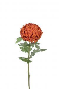 Chrystanthemum - Orange - 70 cm - www.frokenfraken.se