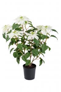 Mr Plant Julstjärna - Vit - 70 cm