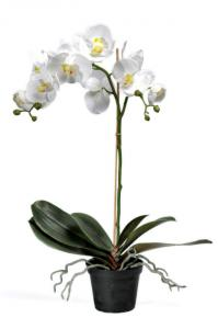 Phalaenopis - Orkidé Vit - Konstväxt - 55 cm - www.frokenfraken.se