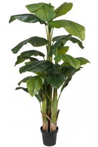 Banan - Grön - 240 cm - www.frokenfraken.se
