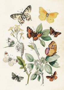 Poster - Fjärilar - 50x70 cm - www.frokenfraken.se