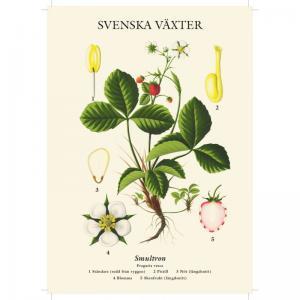 Skolplansch - Smultron - Liten - 32 x 45 cm - www.frokenfraken.se