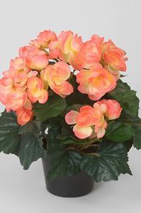 Begonia - Orange - 28 cm - www.frokenfraken.se