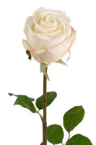 Mr Plant Ros - Vit långskaftad sidenros - 75 cm