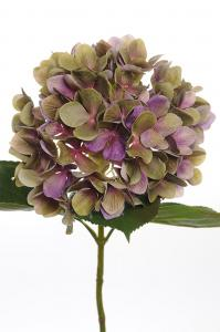 Mr Plant Hortensia - Lila - 65 cm