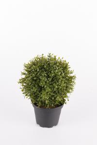 Mr Plant Myrten - Grön - 20 cm - www.frokenfraken.se