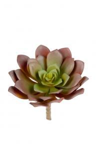 Succulent - Grön - 14 cm - www.frokenfraken.se