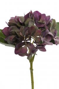 Mr Plant Hortensia - Grön - 25 cm