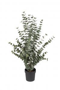 Eucalyptus - - 110 cm - www.frokenfraken.se
