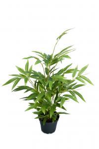 Bambu - Grön - 45 cm - www.frokenfraken.se