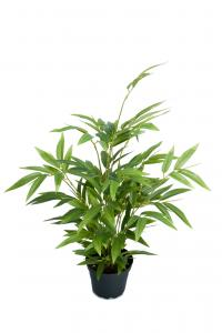 Mr Plant Bambu - Grön - 45 cm