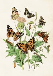 Poster - Fjärilar - 35x50 cm - www.frokenfraken.se