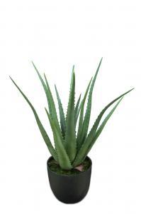 Aloe - Grön - 55 cm - www.frokenfraken.se