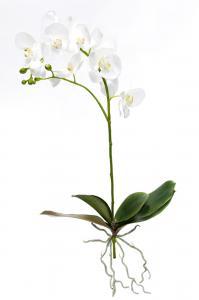 Phalaenopsis - Vit - 80 cm - www.frokenfraken.se