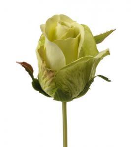 Mr Plant Ros - Limevit knoppig sidenros - 25 cm