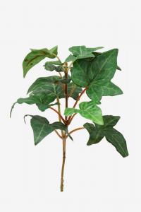 Mr Plant Murgröna - Grön - 15 cm