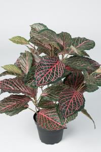 Mr Plant Fittonia - Grön - 40 cm - www.frokenfraken.se