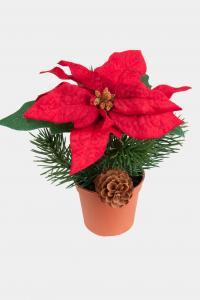 Mr Plant Julstjärna - med Gran & Kottar