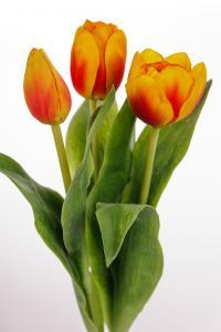 Tulpan mix - 3 st - Orange - 36 cm - www.frokenfraken.se