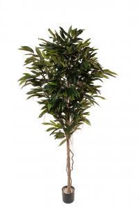 Longifolia - - 200 cm - www.frokenfraken.se